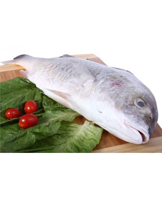 سمك نقرور ايراني