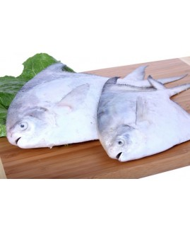 سمك زبيدي كويتي