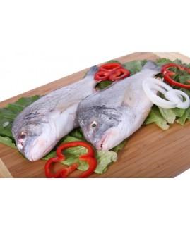 سمك دنيس أسود كويتي