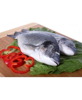 سمك مزرعة سوبيتي تركي