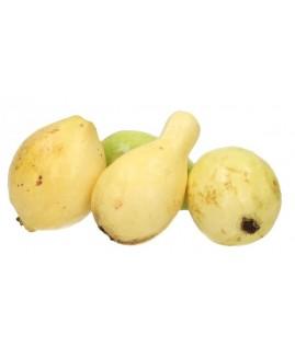 جوافة مصرية