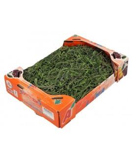 زعتر أخضر - لما صندوق صغير